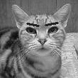モデル:愛猫YUKI(♀)