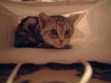 猫 in 紙袋