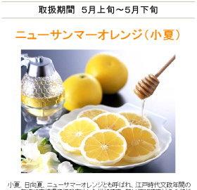 040518_s-orange2.jpg