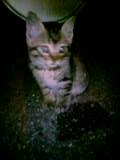 040607_babycat2.jpg