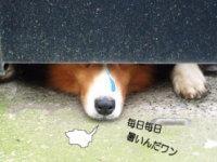 040620_dog.jpg
