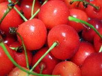 040625_cherry.jpg