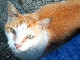040711_cat1.jpg