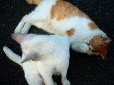 040711_cat3.jpg