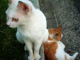 040711_cat4.jpg