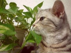 観葉植物に寄り添う我が猫