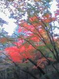 赤や黄色に色付いた葉っぱたち