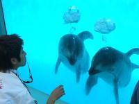 口から出した泡で水中に「天使の輪」を作る2匹のイルカ