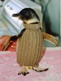 ベージュのセーターを着たペンギンさん
