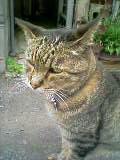 サバ猫さん