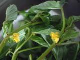 黄色いかわいいお花がついてます
