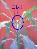 ココに、葉っぱとは違う何だか白っぽいものが・・・