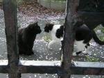 白黒猫さんと黒猫さん