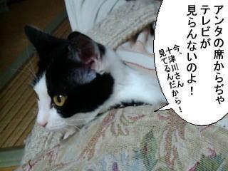 アンタの席からぢゃ、テレビが見らんないのよ!今、十津川さん見てるんだから!